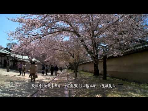 2011日本春之旅(3)-京都(B)-醍醐寺.嵯峨嵐山.mp4