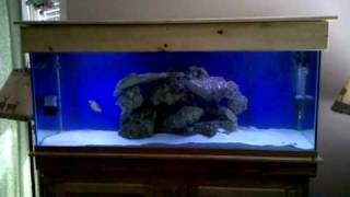 125 Gallon Saltwater Aquarium