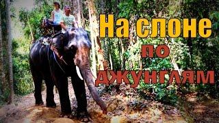 На слоне по джунглям. Сафари /часть 3/. Тайланд. Пхукет.