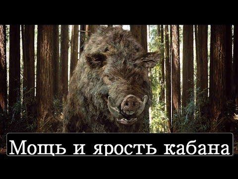 Версус! Кабан - ярость и мощь дикого зверя!