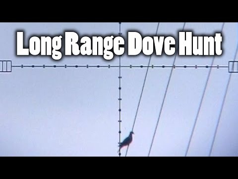 Long Range Dove Hunting