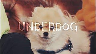 이것이 바로 개힙합! 할랕은 날 영입하라멍! Monk - Underdog (Prod. by Sway D)