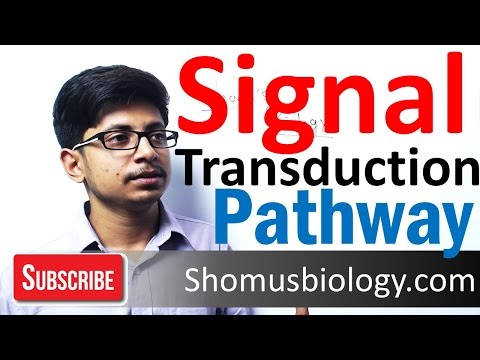 Signal transduction pathway | G protein signaling pathway