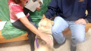 Lorna The Husky Getting Adopted!