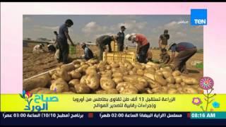 صباح الورد - الزراعة تستقبل 13 ألف طن تقاوي بطاطس من أوروبا وإجراءات رقابية لتصدير الموالح