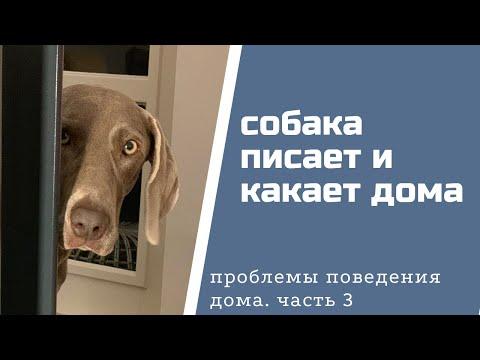 Вопрос: Пёсик стал вдруг ходить в туалет дома, с чем это связано, как отучить?