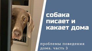 Как отучить собаку писать и какать дома?