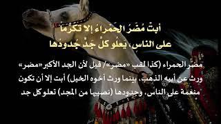 قصيده همام بن غالب التميمي (الفرزدق)، في بني تميم و مضر الحمراء
