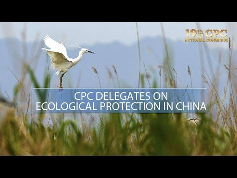 Live: CPC delegates on ecology and environmental protection 党代表就生态环保问题答记者问