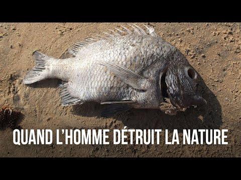 QUAND L'HOMME DÉTRUIT LA NATURE - DES CHIFFRES ET LE MONDE
