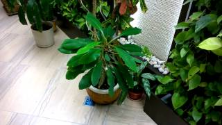 видео Зимний сад : оазис в доме