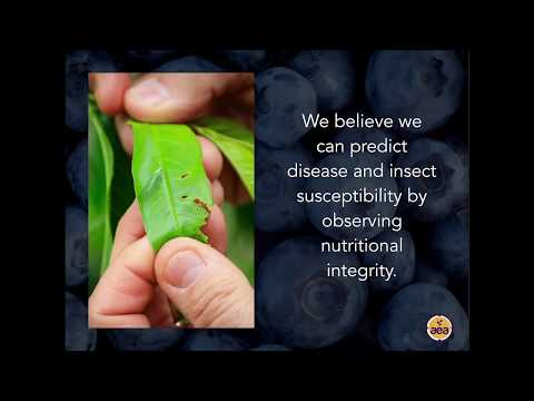 Tools for Plant Diagnostics of Mineral Nutrition