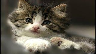 動物病院のスタッフに茂みの中から保護された幼い子猫。みんなの心を虜...