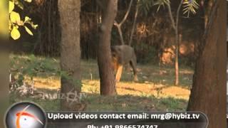 Indira Gandhi Zoological Park, Kambalakonda, Visakhapatnam - hybiz.tv