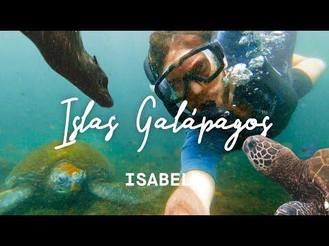 EL MILAGRO DE LA EVOLUCIÓN: GALÁPAGOS (Isla Isabela) 4K | enriquealex