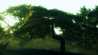 Sleeping Forest - Green Tears