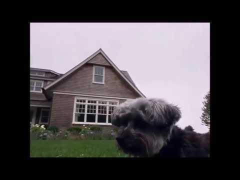 Esther Bieber   dog of Justin Bieber fighting his bodyguard Evert Viera   July 11, 2016