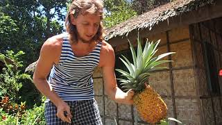 Как растут ананасы у нас на участке 31 августа 2017