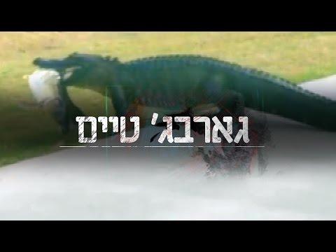 גארבג' טיים: תנין פרץ למגרש עם דג בפה