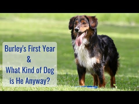 life-in-a-tiny-house-called-fy-nyth---burley's-first-year-&-what-kind-of-dog-is-he?