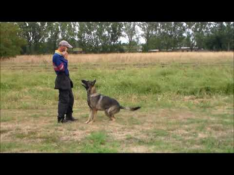 ark-|-personal-protection-dogs---canada