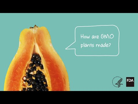 Agricultural Biotechnology: How Are GMO Plants Made?