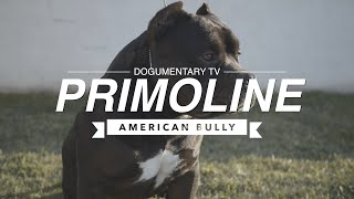 PRIMOLINE: STAYING TRUE TO THE AMERICAN BULLY VISION