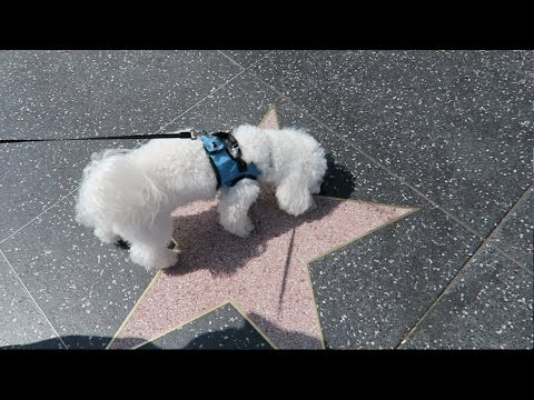 QUINCY CLAIMS HIS HOLLYWOOD STAR!