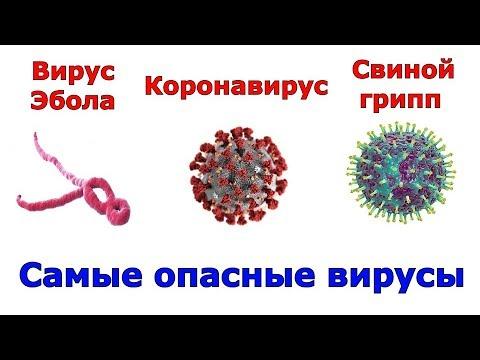 Сравнение самых опасных вирусов за всю историю человечества
