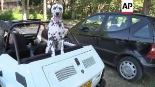 Havana Hosts International Dog Show Featuring Some 245 Dogs