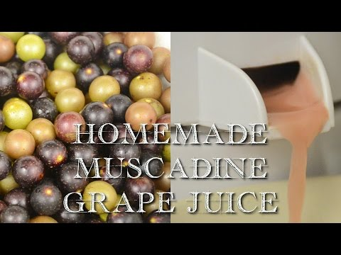 Homemade Muscadine Juice