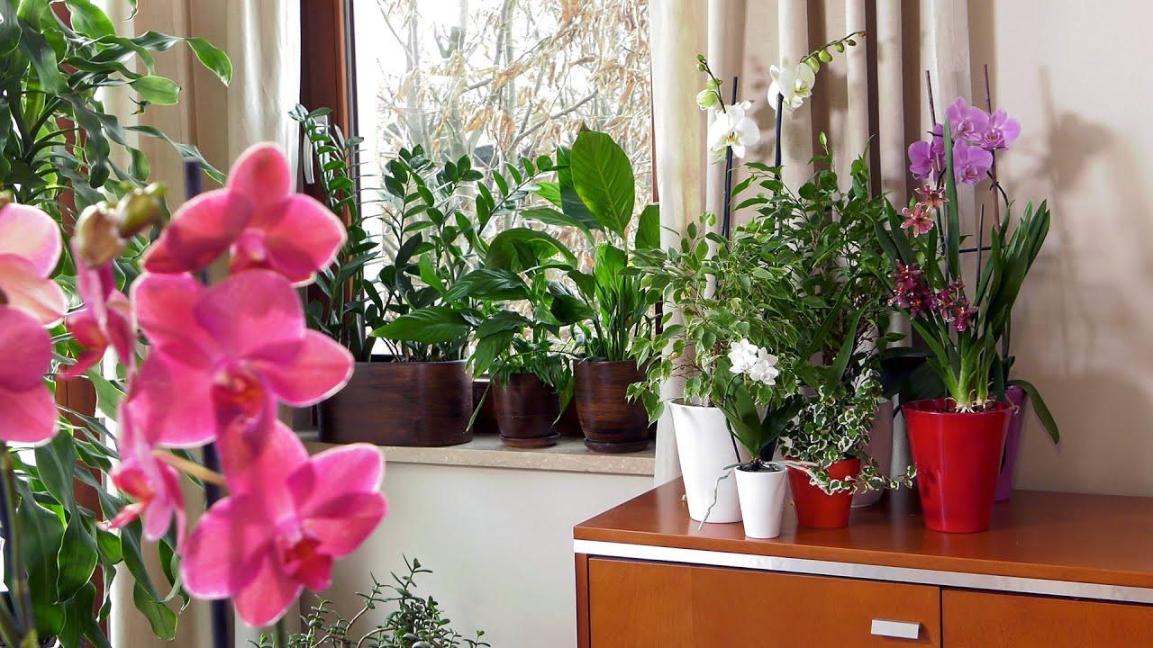Gdzie Najlepiej Postawic Kwiaty I Rosliny Doniczkowe W Mieszkaniu Youtube