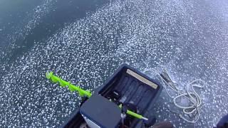 Ирикла Від Василя Нікітіна. Листопад Знято з підводного камерою Aqua Vu2016 р