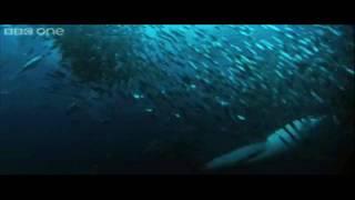 Życie w oceanach: 3D Natury