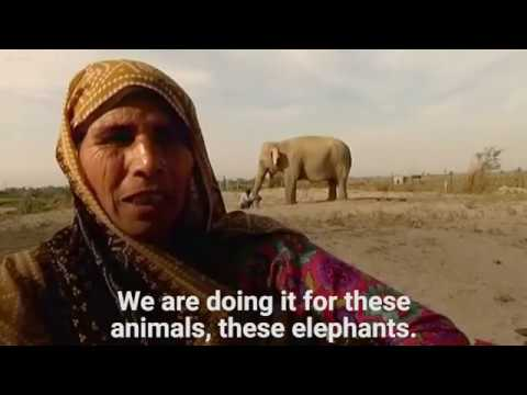 These Villagers In India Are Making Jumpers For Elephants