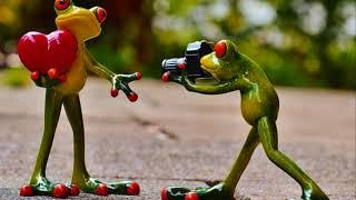 Ο βάτραχος της αγάπης.