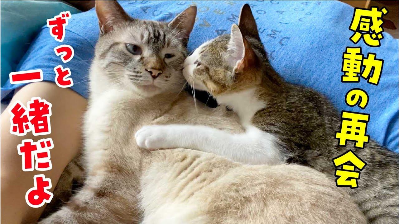 子猫と先住猫が再会!苦難を経て兄弟の絆がより強まりました