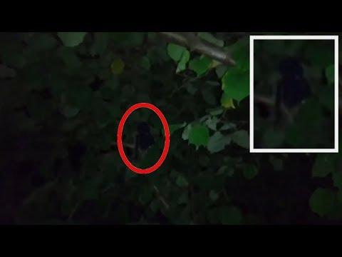 ГУМАНОИД ЗАГАДОЧНОЕ СУЩЕСТВО СНЯТ НА КАМЕРУ В ЧЕЛЯБИНСКЕ | странное существо в дереве