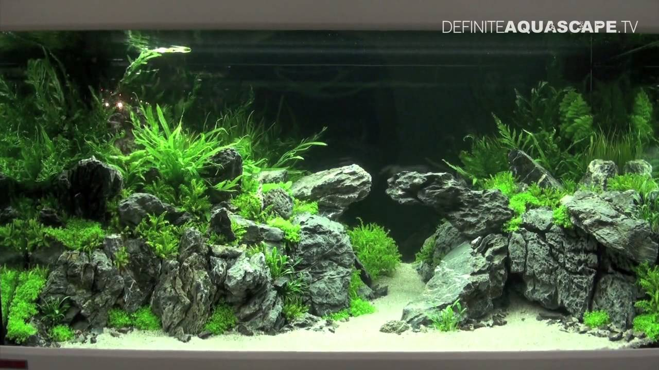 Aquascaping Qualifyings For The Art Of The Planted Aquarium 2015 Region North Xl Tanks Part