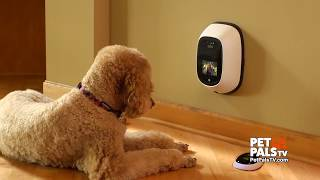 Your pet can text you now with this gadget