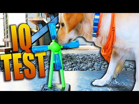 TESTING OUR DOGS IQ (Super Cooper Sunday #110)