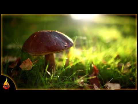 Whimsical Ambient Folk Music | Toadstools | Relax, Study, Ambience