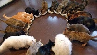 Угарные коты. Удивительные кадры. Лучшая подборка проделок котов)