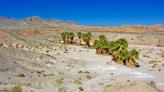 What's a desert landscape without an oasis with palm trees? Along t...