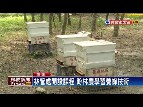 力推林下經濟 培訓林農養蜂-民視新聞