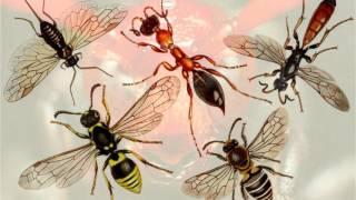 Класс насекомые. Систематика