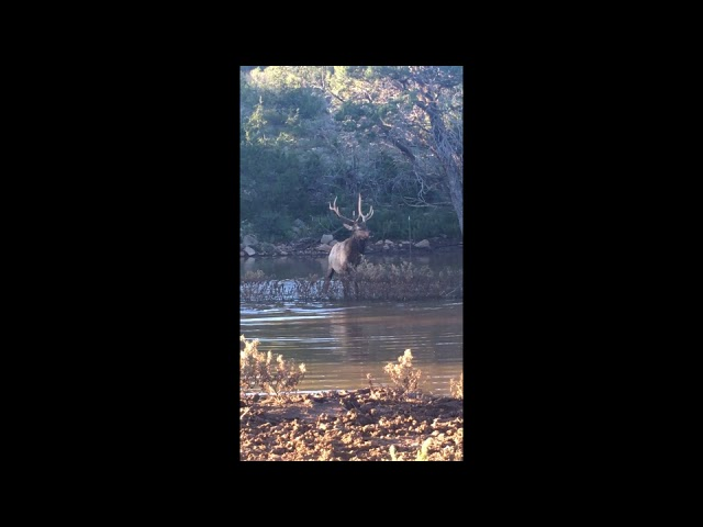 Elk Video Sep 19, 6 24 35 PM