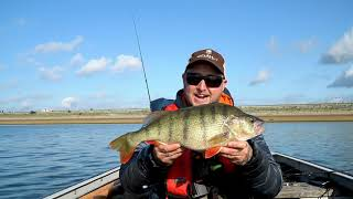 One of the best BIG UK Perch hauls ever caught on film