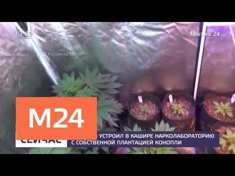 Москвич устроил в Кашире нарколабораторию с собственной плантацией конопли - Москва 24