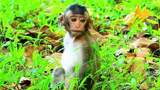 Help Me...Papa I Can Not Pass Stool,Orphan Baby monkey copper has Constipation